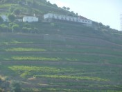 Vineyard with huge plot in Douro 