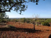Plot with amazing sea views in Alcaria Cova 